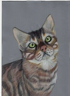 Hand drawn custom colour artwork commissions Pet or animal of your choice
