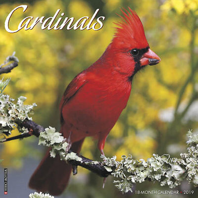 2019 Cardinals Red Birds Cardinal Redbird Song Bird Wall Calendar 18 Month  New