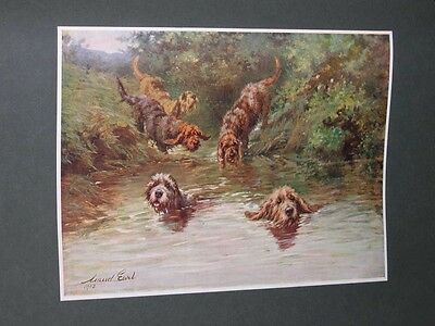 Large Antique Otterhound Dog Picture 1902 By Maud Earl Otter Hunting