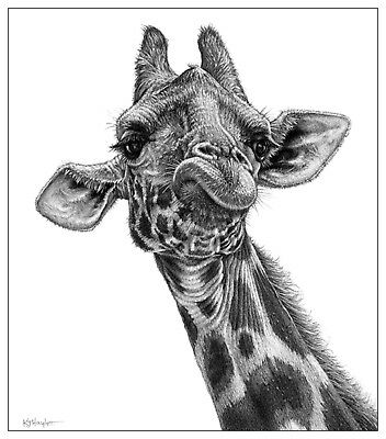 Giraffe print picture animal wall art poster wildlife b/w pencil drawing sketch