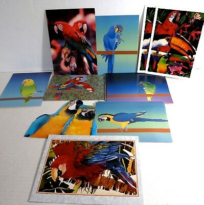 Lot 15+ Parrot Greeting Cards Blank Unusued Amazons Macaws