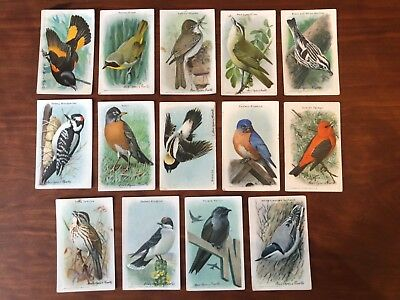 "Vintage (1938) Arm And Hammer ""useful Birds Of America"" Ninth Series Cards 14"