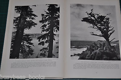 1915 CALIFORNIA magazine article about people, geography scenery etc