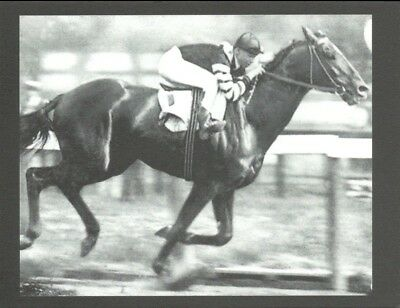 """1920 US Horse of the Year Named Thoroughbred Horse Postcard """"Man O' War"""""""