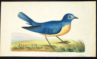 1783,RARE SHAW & NODDER Painted By Hand ENGRAVING BLUE REDBREAST VZ3