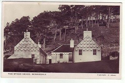 Stags Heads Berriedale Caithness 5 Aug 1954 Real Photograph J Adams Old Postcard