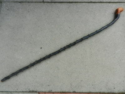 "Antique Irish BLACKTHORN WALKING STICK Rootball 35"" Long"