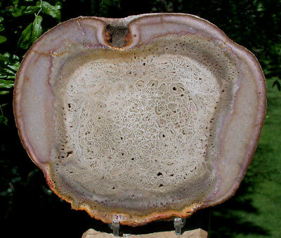 SiS: PERFECT Tietea Tree Fern Round - Intricately Preserved Square!