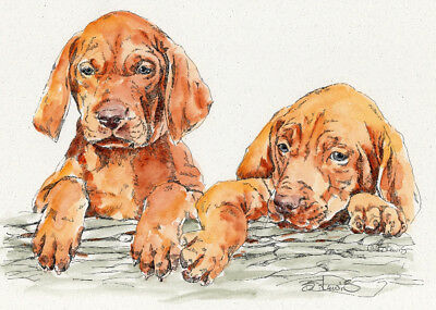 VIZSLA PAIR Original Watercolor on Ink Print Matted 11x14 Ready to Frame