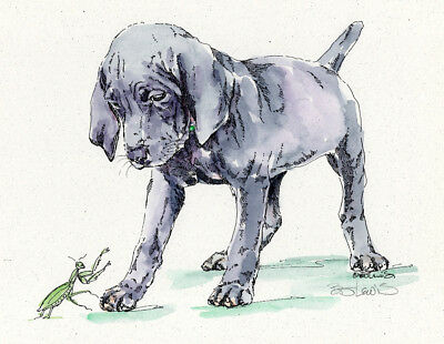 WEIMARANER Original Watercolor on Ink Print Matted 11x14 Ready to Frame