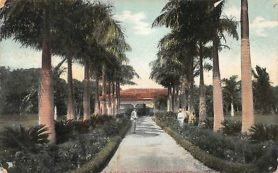 C09-3057, Palm Lined Walkway, Antique Postcard,