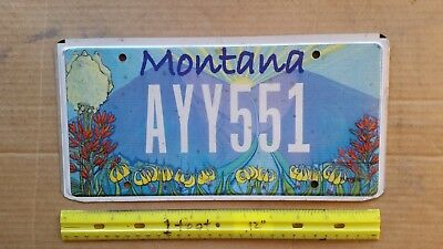 License Plate, Montana, Specialty: Floral Graphics, AYY 551