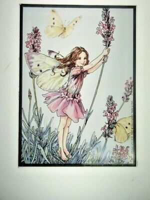Glassmasters: The Lavender Fairy by Cecily Mary Barker. 7x5 inches