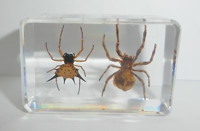 Spiny Spider & Ghost Spider Collection Set Clear Education Insect Specimen