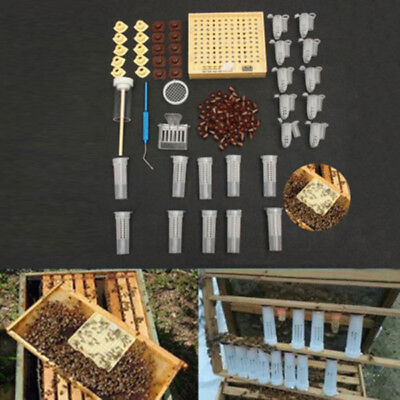 155Pcs Queen Rearing System Cultivating Box-Bee Catcher Cage Beekeeping Tool UK