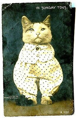 rppc~CAT DRESSED-UP~IN SUNDAY TOGS- RARE ROTOGRAPH 1908 ERA PC~)(lightly posted)