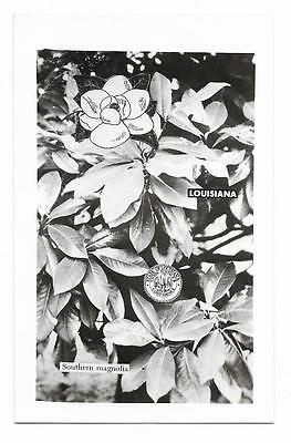 Vintage Louisiana RPPC Postcard State Flower Southern Magnolia State Emblem