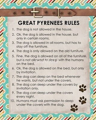 GREAT PYRENEES Rules 8 x 10 Magnet