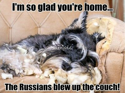 MINIATURE SCHNAUZER Russians Blew Up the Couch Magnet  4 x 3in