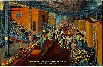 6584 Unloading Bananas from Ship Side New Orleans LA Postcard 7A-H3126