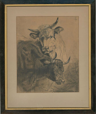 Louis Ollier - 20th Century Pen and Ink Drawing, Portrait of Two Bulls