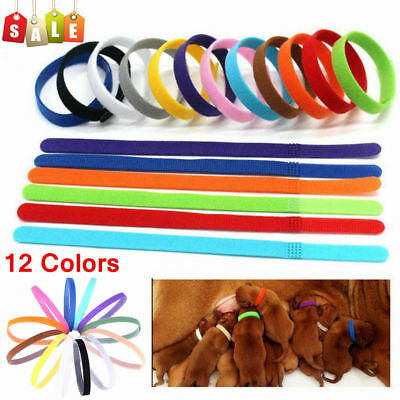 Collier Réglable Stickers Magic ID d'Identification de Chiot Chatons 12 Couleurs