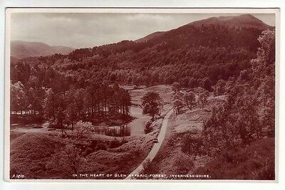In The Heart of Glen Affaric Affric Forest Inverness Real Photograph JB White