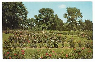 Vintage Minnesota Chrome Postcard Magnificent Rose Gardens Minneapolis Parks