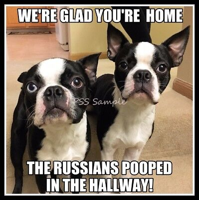 "BOSTON TERRIER The Russians Pooped in the Hallway Fridge Magnet 3.75"" x 3.75"""