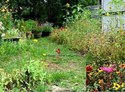 Southeast Wildflower Mix Seeds -     binS3