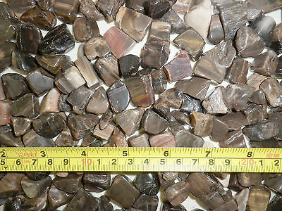 Tumbled Fossil Stone Fossil Petrified Wood small size pieces 1000 gram Lot