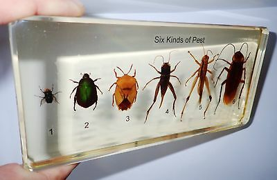 Six Kinds of Pest Insect Set in Amber Clear Block Education Real Specimen