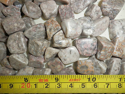 Tumbled Fossil Stones Pisolitic Limestone 2.4 to 9.2 g size pieces 50 gram Lot