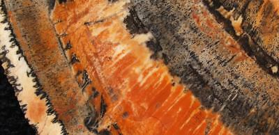 Rock slab ARIZONA PETRIFIED WOOD  - spectacular colors!!!!