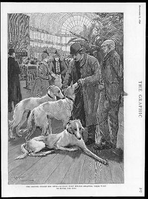 1890 Antique Print - LONDON  Crystal Palace Dog Show Russian Wolf Hounds  (88)