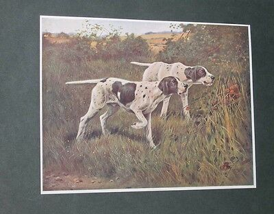 Large Antique English Pointer Dog Picture 1902 By Thomas Blinks Hunting Pointers