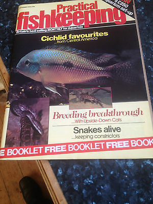 PRACTICAL FISHKEEPING  November 1983,Cichlid favourites from central America