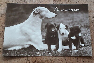 Greyhound With Pups Real Photographic Dog Postcard