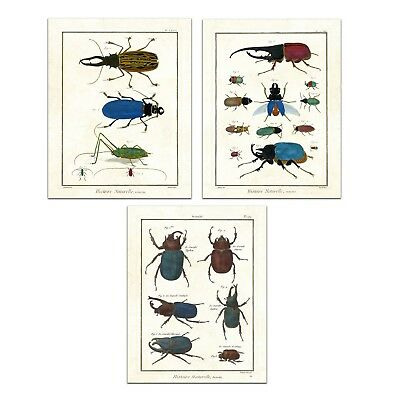 Antique Beetles and Scarabs - Gallery Wall Print Set (Set of 3, 8x10 in)