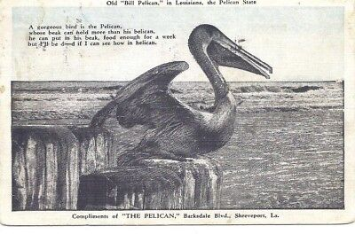 LA - Old Bill the Pelican - Shreveport - 1936