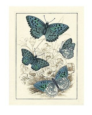 Enchanting Butterflies-Vintage Animal Print - Giclee Quality Unframed Poster