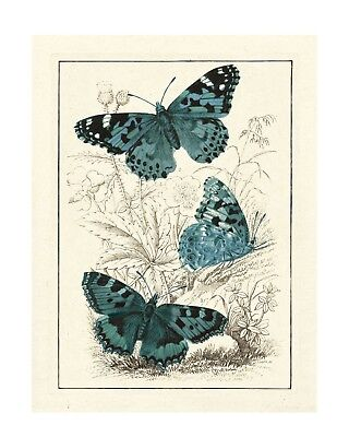 Dancing Butterflies - Vintage Animal Print -Giclee Quality, Unframed Poster