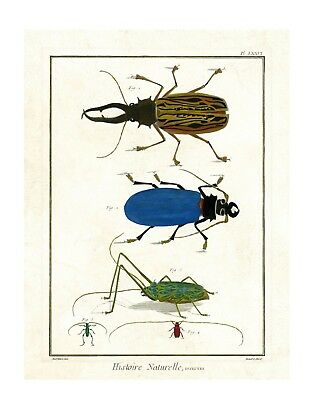 Colorful Beetles - Vintage Animal Print -Giclee Quality Unframed Poster