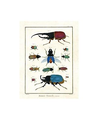 Jewel Toned Beetles - Vintage Insect Print - Giclee Quality Unframed Poster