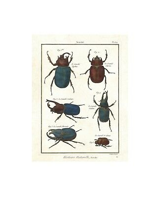 Mystical Egyptian Scarabs - Vintage Insect Print -Giclee Quality Unframed Poster
