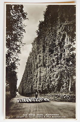 BLAIRGOWRIE, The Beech Hedge, Perthshire RP - 1930's - Vintage postcard