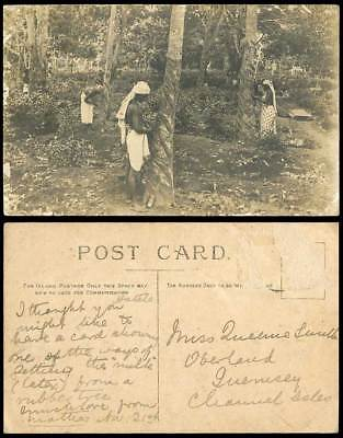 Ceylon Old Real Photo Postcard Rubber Tappers Tapping Trees Using English Method