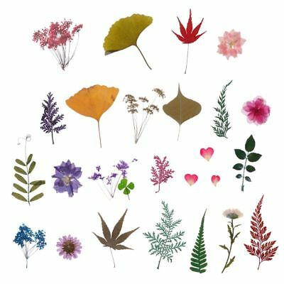 Mix Pressed Flower Plant Leaves Specimen Fillers for Epoxy Resin Jewelry Making