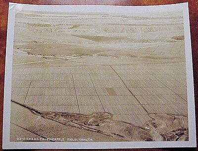 1930's Aerial Pineapple Field Oahu Territory of Hawaii