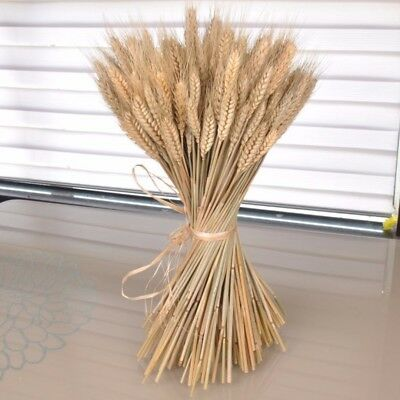 100Pcs Natural Dried Wheat Stems Arranging Ready Bouquet Flowers Decorations